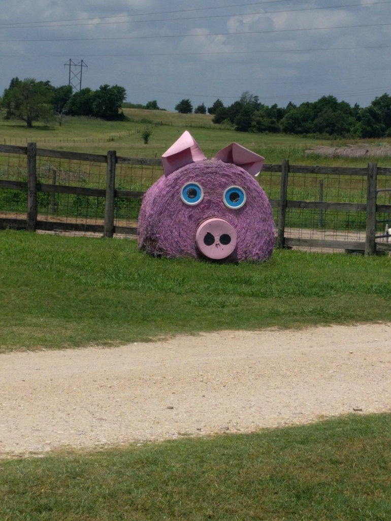Jersey Barnyard Pig