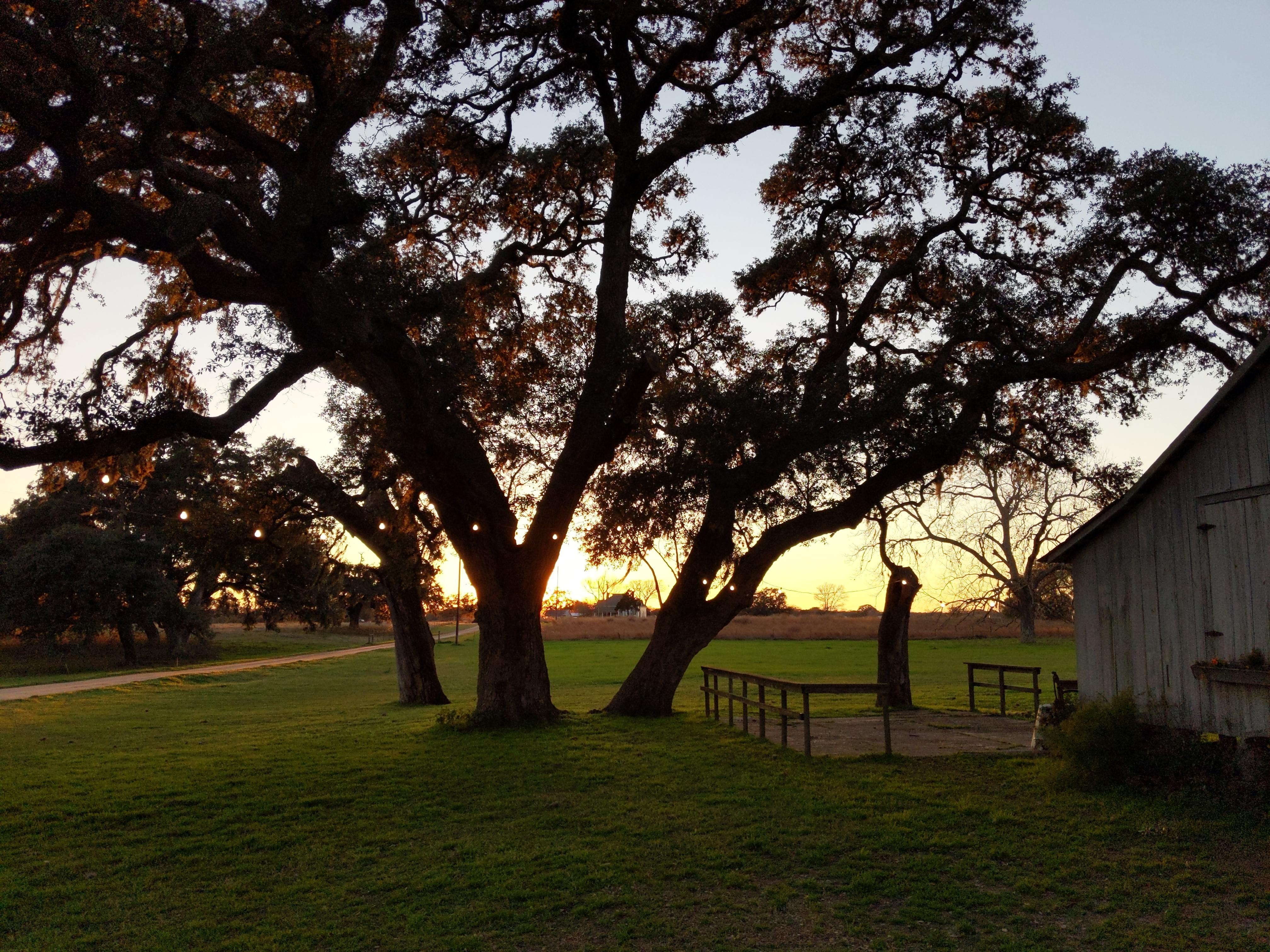 Sunset light through old oak trees